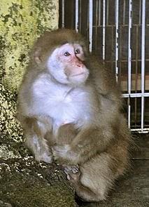 Lucky the Monkey--AP Photo 2010