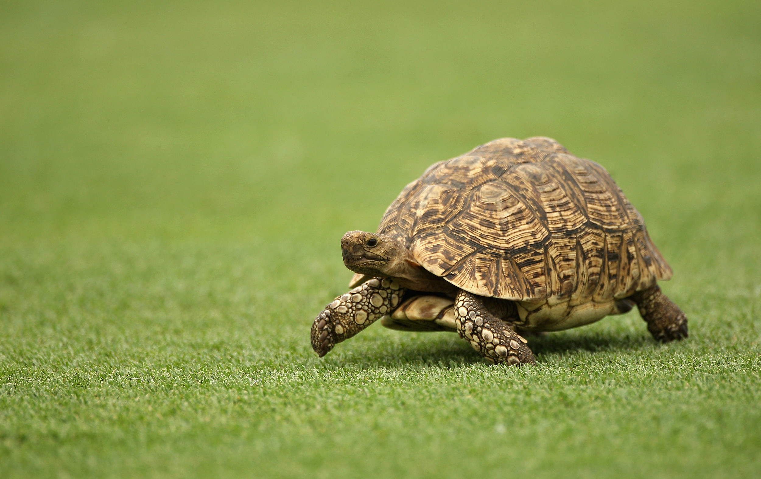 That Tortoise Can Eat! [VIDEO]