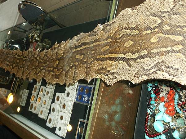 12' Anaconda Snake Skin for Sale on Tri-Cities Craigslist!